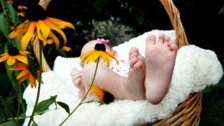 コウノトリ 赤ちゃん
